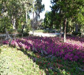 Mdina - giardini botanici
